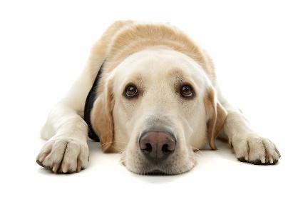 sad_puppy_72ppi.jpg