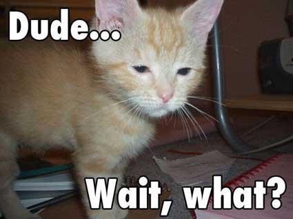 Cat What.JPG