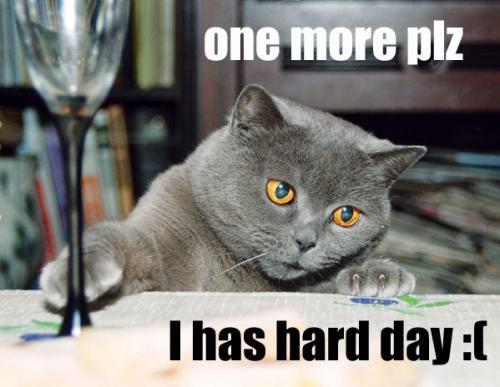 Stressed Cat.JPG