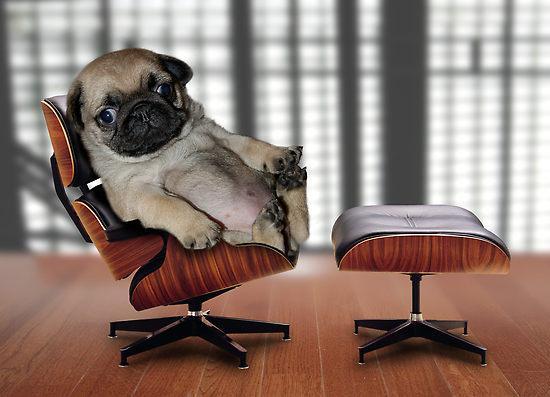 Top Dog.JPG