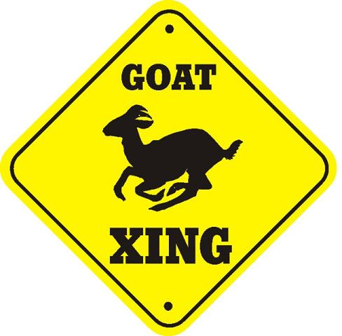 Goat Xing.JPG
