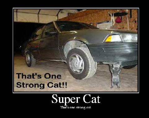 Super Cat.JPG