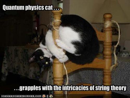 Quantum Physics Cat.JPG