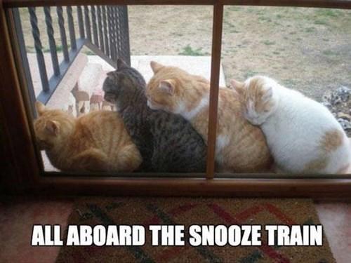 funny_cat_689