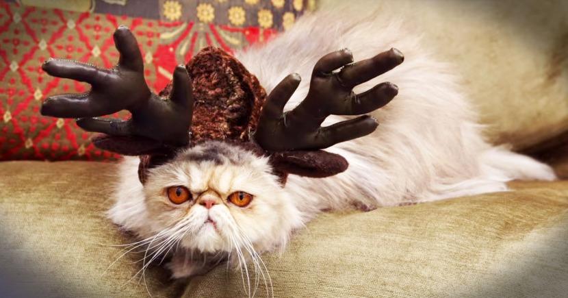 image_1449091153_jd_godvine_sorry_to_cats_FB