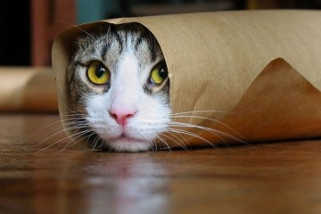 funny-cats-compilation-most-see-1