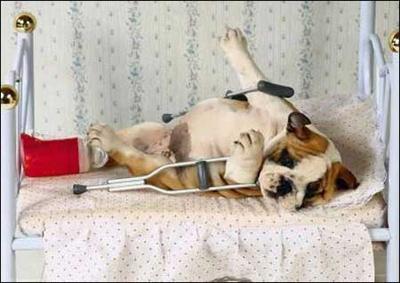 the-Seriously-injured-dog